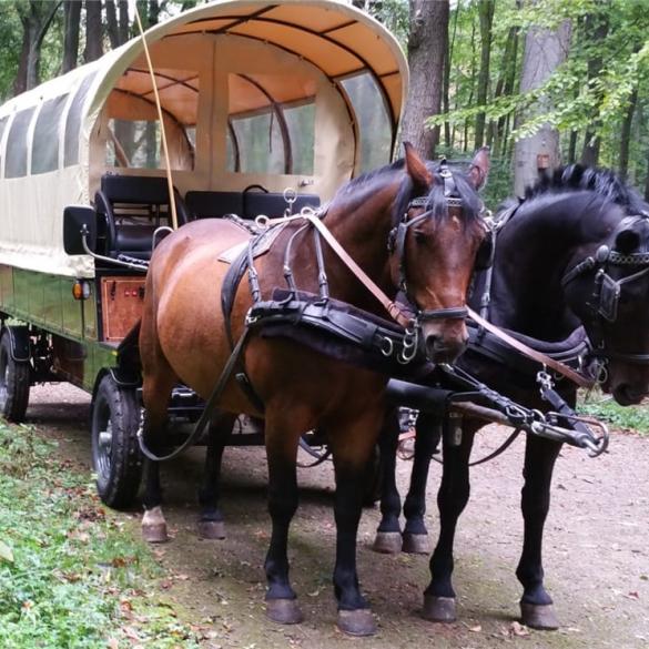 Für eine kleine Gruppe in einer edlen herrschaftlichen Kutsche (Wagonette oder Jagdwagen) für eine größere Gruppe in einem robusten Planwagen (13...
