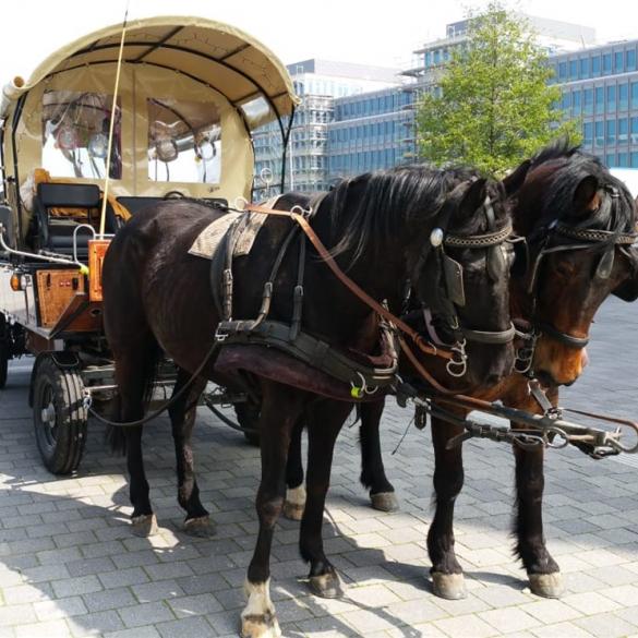 Für eine kleine Gruppe in einer edlen herrschaftlichen Kutsche (Wogonette oder Jagdwagen) für eine größere Gruppe in einem robusten Planwagen (14...