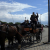 Pferd & Wagen